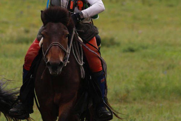 Sally Toye - Endurance Rider
