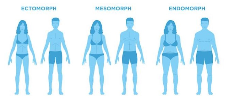 Different Body Type Images